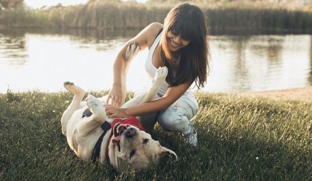 ცხოველების ექსპერტი განმარტავს, თუ რატომ არ არის აუცილებელი ძაღლს მუცელზე მოვეფეროთ