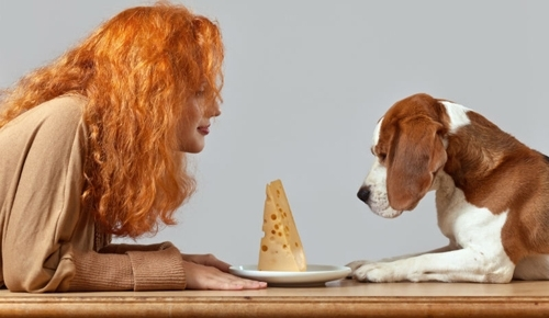 შეიძლება თუ არა ძაღლს  საკვებად მისცეთ ყველი?
