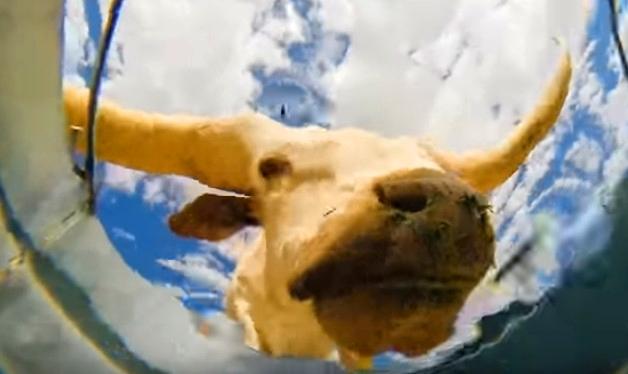 ნახეთ, რა დააფიქსირა შუა უდაბნოში, წყლით სავსე ჭუჭლის ძირში მოთავსებულმა კამერამ... (+ვიდეო)