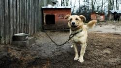 2016 წლიდან უნგრეთში ძაღლის ჯაჭვით დაბმა აკრძალეს
