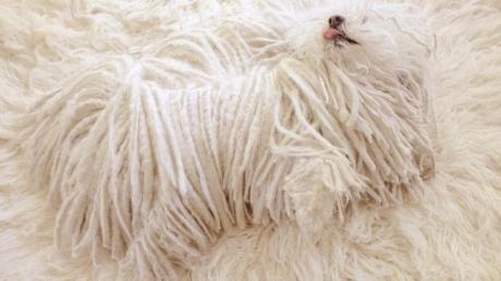"""მარკ ცუკერბერგმა გაავრცელა საკუთარი ძაღლის ფოტო - """"ასე შეუძლია მას ყველგან დაიმალოს"""""""