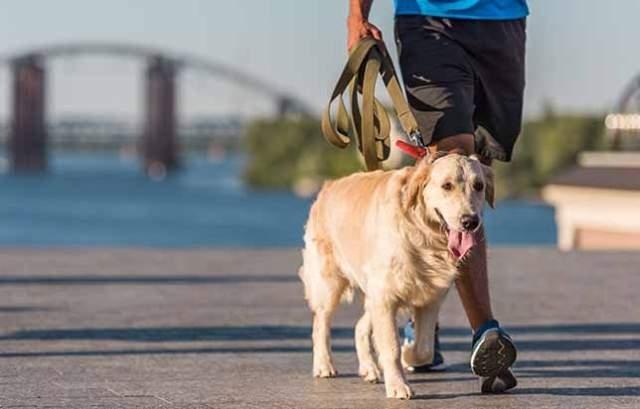 ძაღლის ან სხვა შინაური ცხოველის ფეკალური მასით ტერიტორიის დაბინძურებისთვის დაკისრებული ჯარიმა ორმაგდება