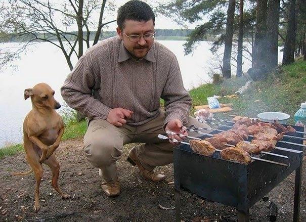 ეს ძაღლები ისეთი ემოციით ითხოვენ საკვებს, რომ უარის თქმა შეუძლებელია (სახალისო ფოტოები)