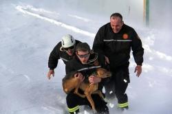 ლაგოდეხის რაიონში, კაბალის ხეობაში თოვლში ჩარჩენილი სასიკვდილოდ განწირული ძაღლი მაშველებმა იხსნეს