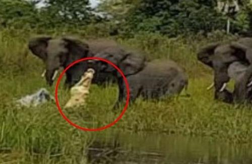 ტურისტი საოცარი ფაქტის მომსწრე გახდა, როდესაც მდინარის ნაპირთან მისულ სპილოების ოჯახს ვიდეოზე იღებდა