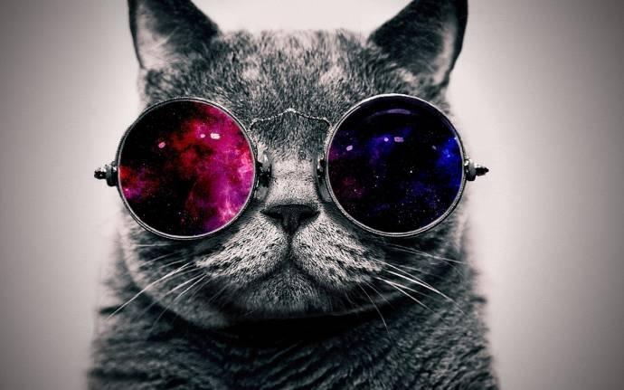 უფოლოგის აზრით, კატები ოთხფეხა უცხოპლანეტელების შთამომავლები არიან