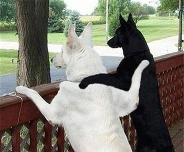 თქვენი ძაღლი და მისი მეგობარი ძაღლები...