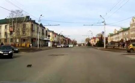 ბავშვმა გზის სავალ ნაწილზე გადმოსული კნუტი გადაარჩინა… (+ვიდეო)