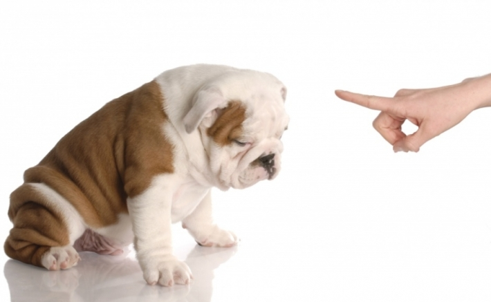 როგორ გადავაჩვიოთ ძაღლი სახლში მოსაქმებას