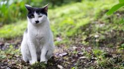 მეცნიერებმა დაადგინეს, თუ რატომ იბადებიან კატები ე.წ. ჰიტლერის იერით
