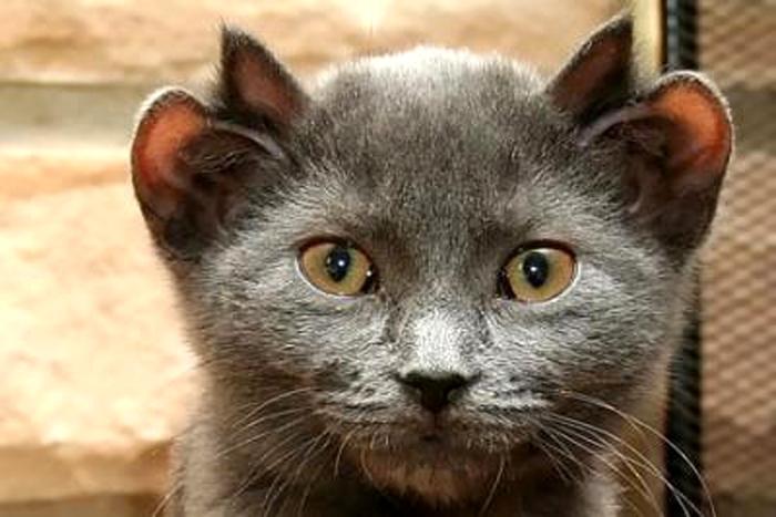 იოდი - კატა, რომელსაც ოთხი ყური აქვს