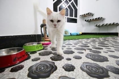ერაყში კატების სასტუმრო გაიხსნა