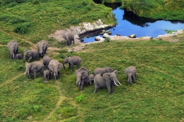 აფრიკიდან სპილოების გაყვანა ცირკებში ან ზოოპარკებში, თითქმის სრულიად აიკრძალა