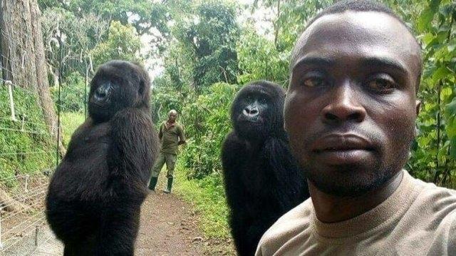 """კონგოს ნაკრძალის თანამშრომლებმა გორილებთან ერთად """"სელფი"""" გადაიღეს"""