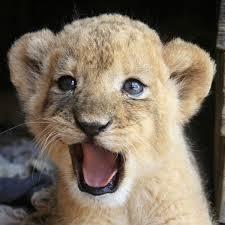 ბედნიერი ცხოველები ფოტო ობიექტივში