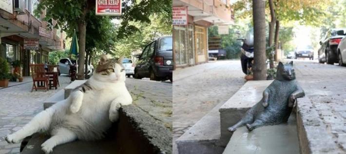 სტამბოლში ყველაზე ცნობილ ზარმაც კატას ქანდაკება დაუდგეს