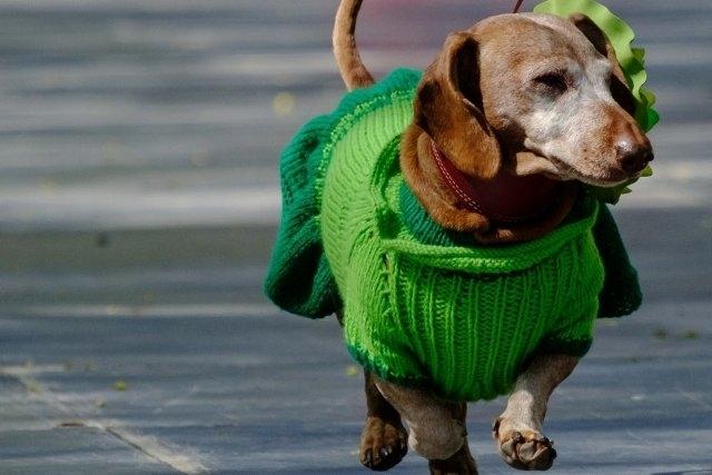 კინოლოგმა ყველაზე მკბენარა ძაღლის ჯიში დაასახელა