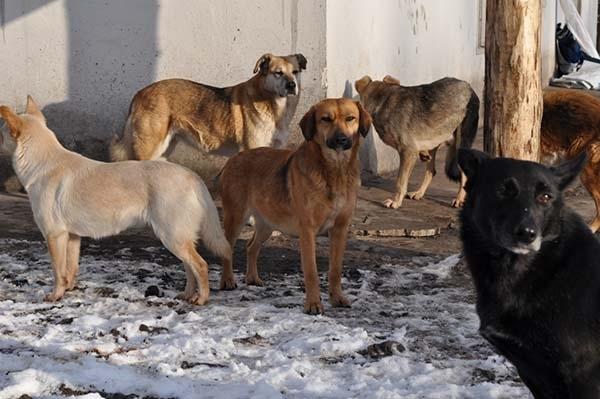 თბილისში ქუჩის ძაღლებს დაითვლიან