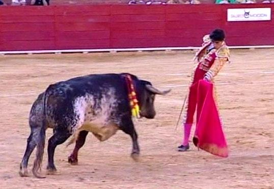 ესპანურმა კორიდამ 29 წლის მატადორის სიცოცხლე იმსხვერპლა (ვიდეო +18)
