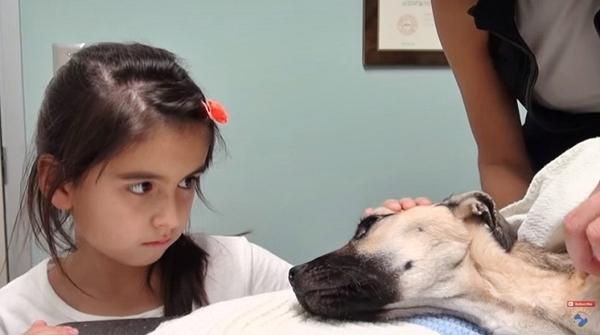 აღარავის ჰქონდა ამ ძაღლის გადარჩენის იმედი, თუმცა, სასწაულებიც ხდება... (+ვიდეო)