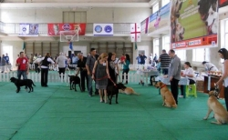თბილისში ძაღლების საერთაშორისო გამოფენა გაიმართება