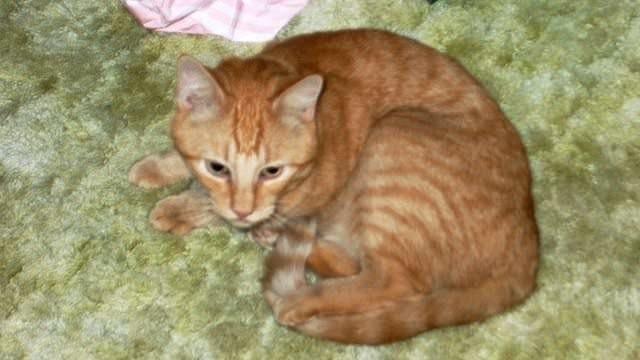 ქარიშხლის დროს დაკარგული კატა პატრონთან 14 წლის შემდეგ დაბრუნდა