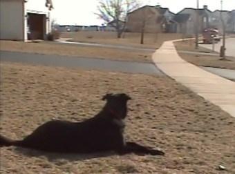 ვერც კი წარმოიდგენთ, რატომ დგას ეს ძაღლი გზაზე (+ვიდეო)