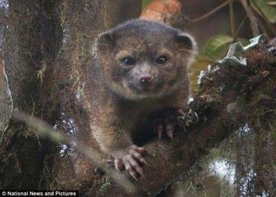 პირველად 35 წლის განმავლობაში, აღმოაჩინეს ახალი სახეობის ცხოველი