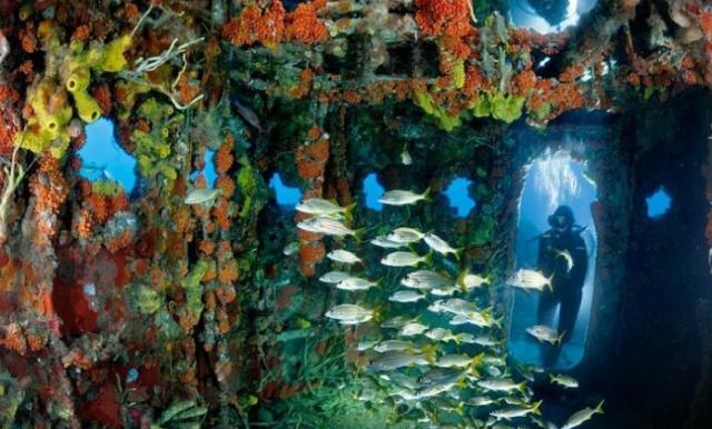 National Geographic-ის ფოტოგრაფების მიერ გადაღებული საოცარი წყალქვეშა სამყარო (უჩვეულო ფოტოები)