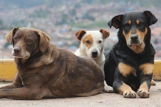 თბილისში უპატრონო ძაღლების დათვლა დასრულდა