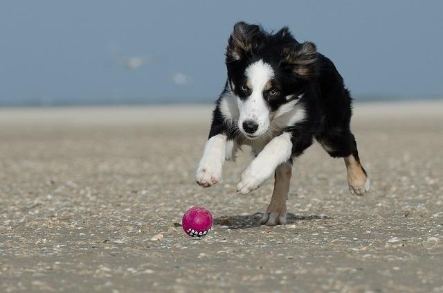 იტალიელმა მეცნიერებმა გამოიკვლიეს, თუ რომელ ფერებს ვერ არჩევენ ძაღლები
