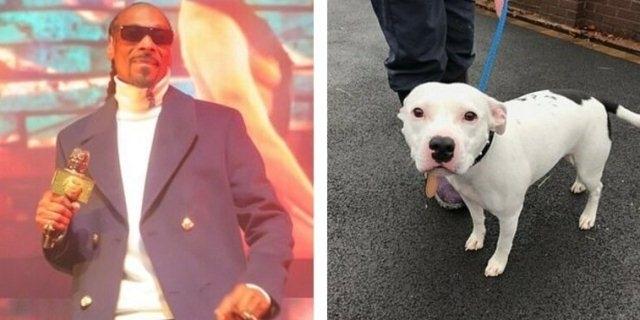 რეპერი სნუპ დოგი მზად არის აიყვანოს ძაღლი, რომელიც შობა ღამეს პატრონმა გზაზე საწოლიანად დატოვა