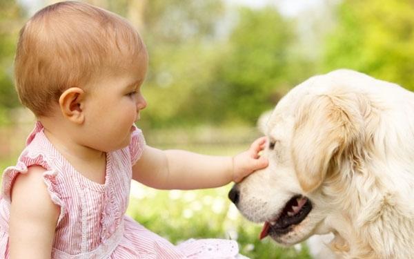 რა ასაკში რომელი შინაური ცხოველის ყოლაა რეკომენდირებული ბავშვისთვის
