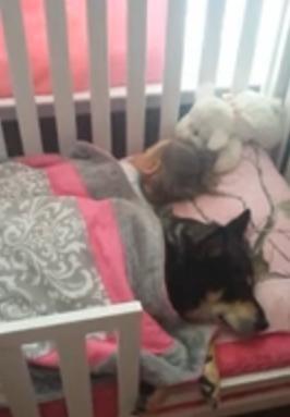 ბავშვი და ძაღლი საეჭვოდ გაჩუმდნენ.. დედა დაინტერესდა რა ხდებოდა… (+ვიდეო)