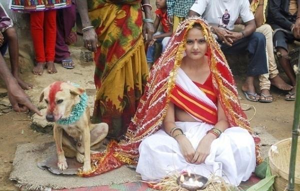 გოგონა უპატრონო ძაღლზე დაქორწინდა (+ვიდეო)