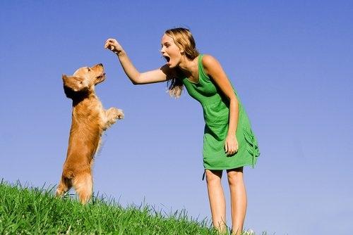 ძაღლის მოშინაურება და წვრთნა