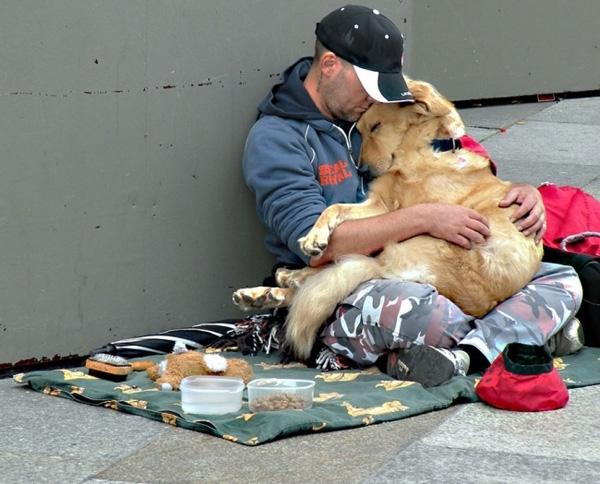 ძაღლები, რომლებმაც არ მიატოვეს პატრონი მძიმე წუთებში (+ფოტო)
