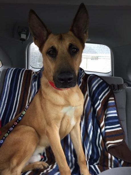 მკვლელობაში ეჭვმიტანილი ძაღლი, რომელმაც 2 თვე სიკვდილის საკანში  გაატარა, გაათავისუფლეს