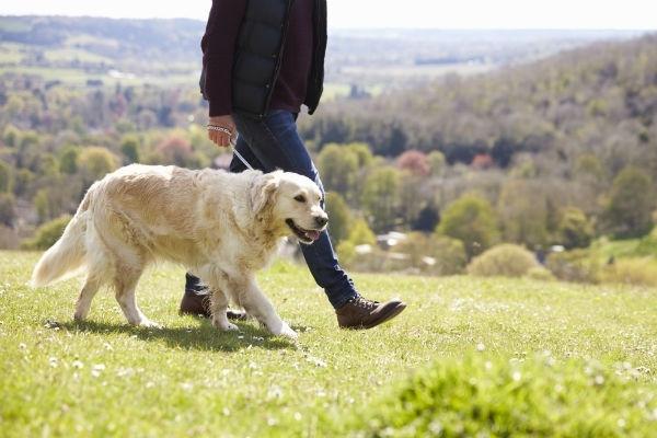 გინდა იყო აქტიური და ჯანმრთელი? აიყვანე ძაღლი