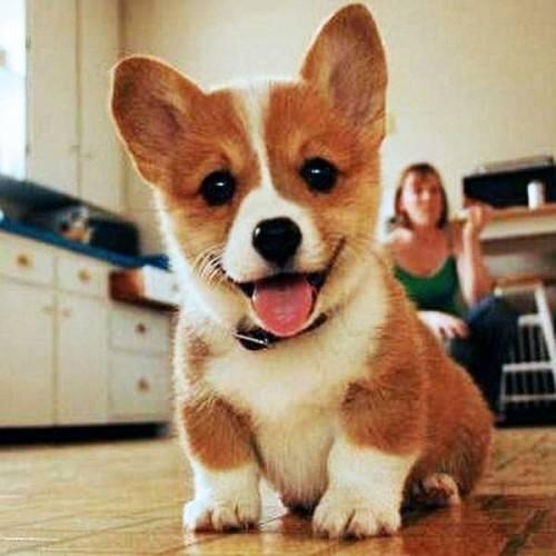 სინამდვილეში რას ფიქრობს ძაღლი პატრონზე?