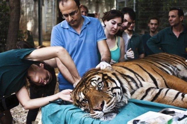 ცხოველები, რომლებსაც ადამიანებმა სიცოცხლის მეორე შანსი მისცეს
