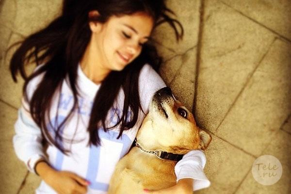 ცნობილი და მდიდარი მსახიობები, რომლებმაც ძაღლები თავშესაფრიდან აიყვანეს