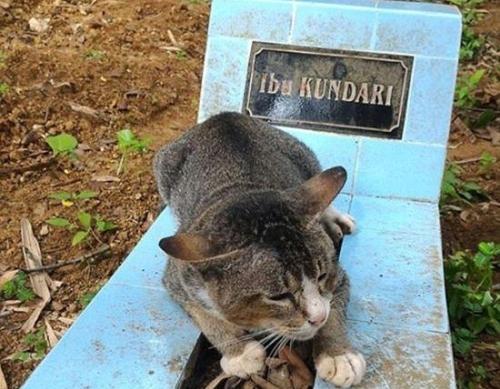 კატა ერთი წელია, გარდაცვლილი პატრონის საფლავს არ ტოვებს