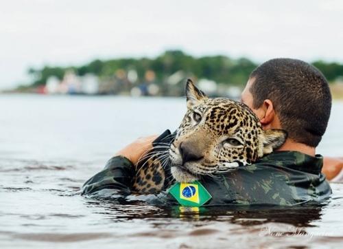 """იაგუარი ბრაზილიელი ჯარისკაცების """"შვილობილი"""" გახდა"""