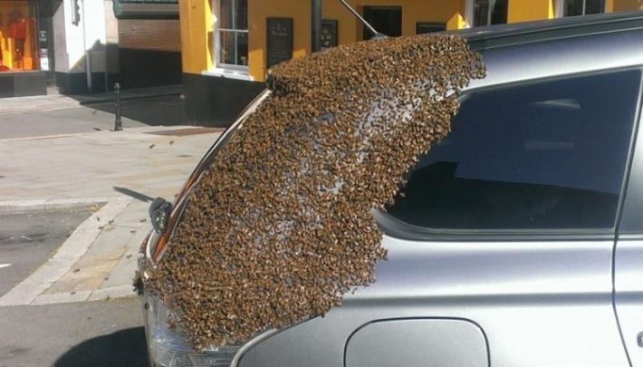 ორი დღის მანძილზე ფუტკრებს მის მანქანაზე იერიში მიქონდათ.. საბარგულის გახსნის შემდეგ ის მიხვდა, რაში იყო საქმე..