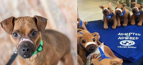 ცხოველთა ორგანიზაციამ იმ ძაღლის მსგავსი სათამაშო შექმნა, რომელიც სისასტიკის მსხვერპლი გახდა