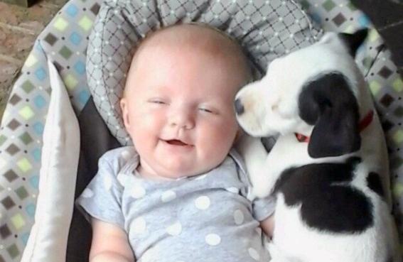 პიტბული და პატარა გოგონა - დაბადებიდან საუკეთესო მეგობრები (+ფოტო & ვიდეო)