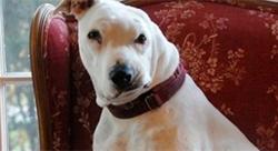 ბრძოლის შემდეგ ეს დაჭრილი ძაღლი დატოვეს, რათა მომკვდარიყო.. მაგრამ 12 წლის ბავშვის გამოჩენამ მისი სიცოცხლე მთლიანად შეცვალა