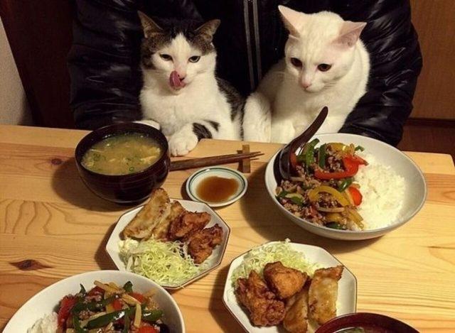 კატების რეაქცია პატრონების საკვებზე (სახალისო ფოტოები)