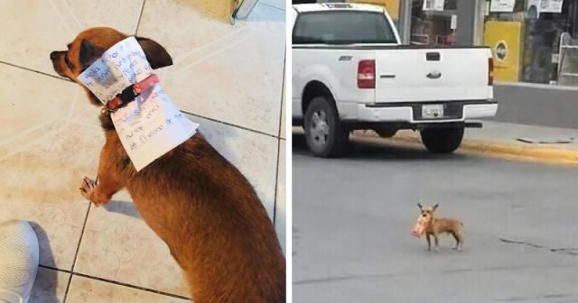 კარანტინში მყოფმა მექსიკელმა მამაკაცმა თავისი ძაღლი ჩიფსების საყიდლად გაუშვა